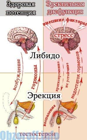 A varicocele befolyásolja az erekciót