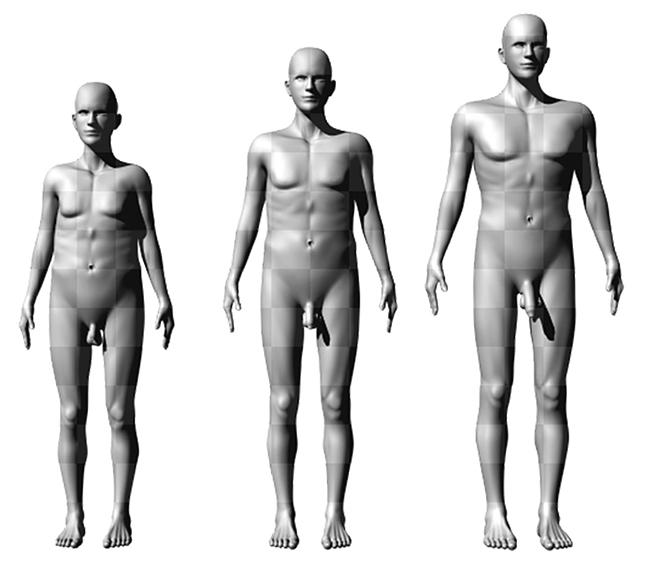 férfi péniszméretek alakja