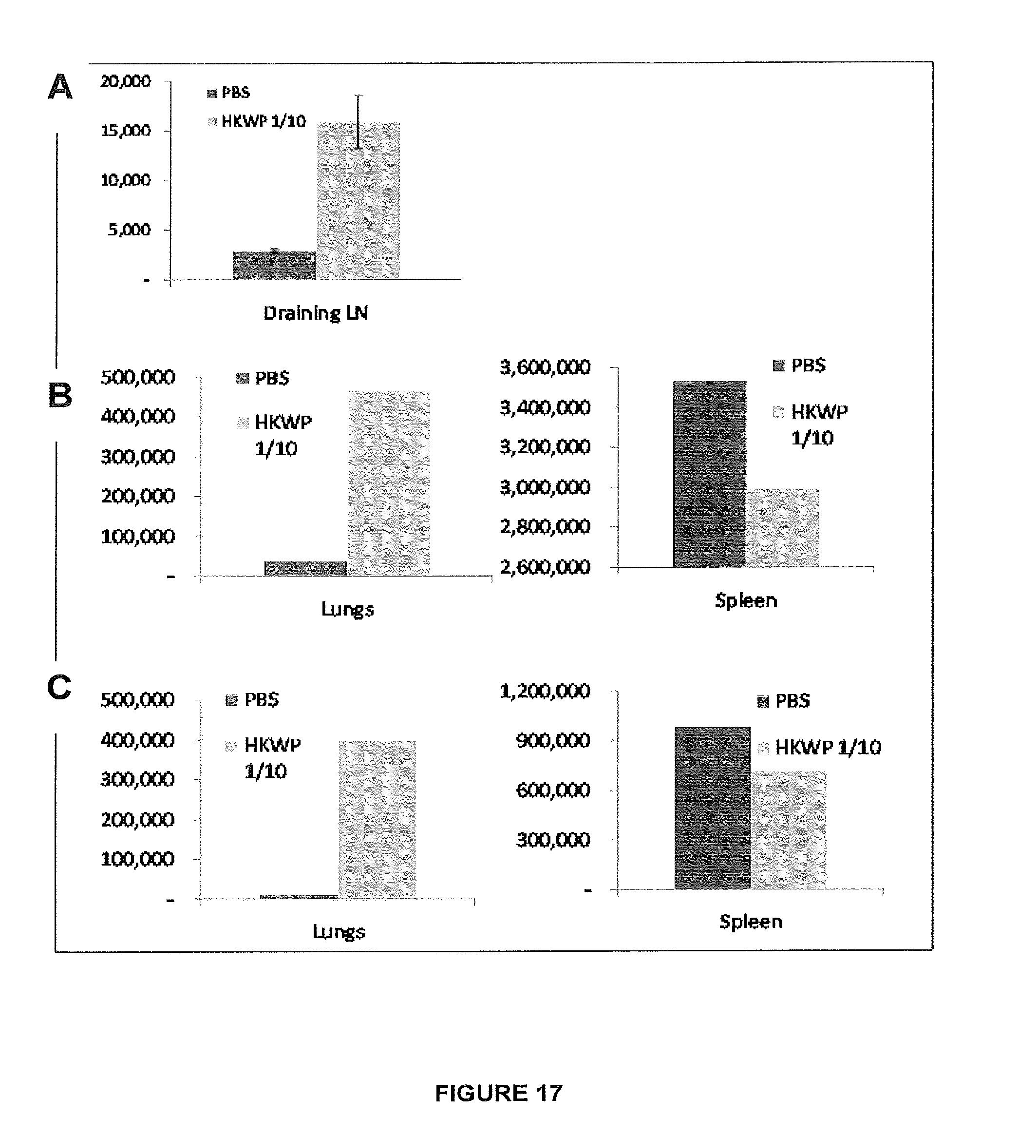 colibacillus pénisz merevedés egy férfiban reggel