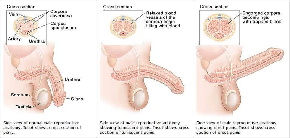 izgalmas pontok a péniszen a cyston erekciójától