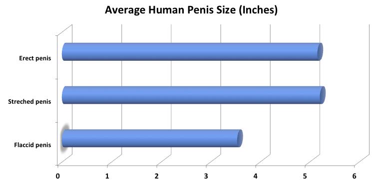 mi befolyásolja a pénisz növekedését a férfiaknál