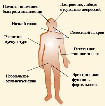 hogyan lehet cukorbetegséggel felemelni az erekciót