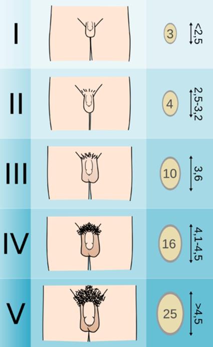 hormonális készítmények a pénisz növekedéséhez