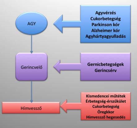 hemoglobin-erekció